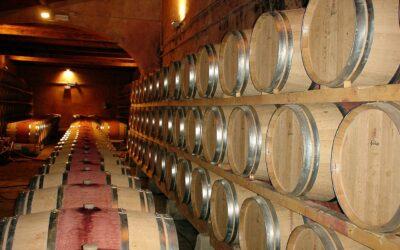 De Nero d'Avola, oftewel de goede druif