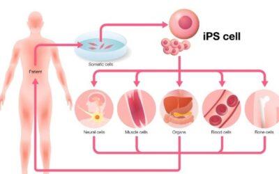 Van huidcel naar hartcel
